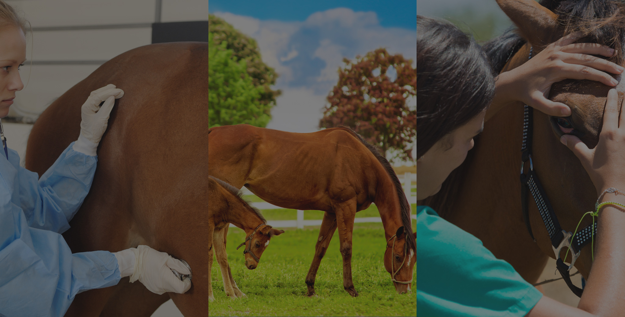 equine vet med We are a full-service hospital that provides outstanding, compassionate treatment  for dogs and cats, horses, exotic animals, and farm animals.