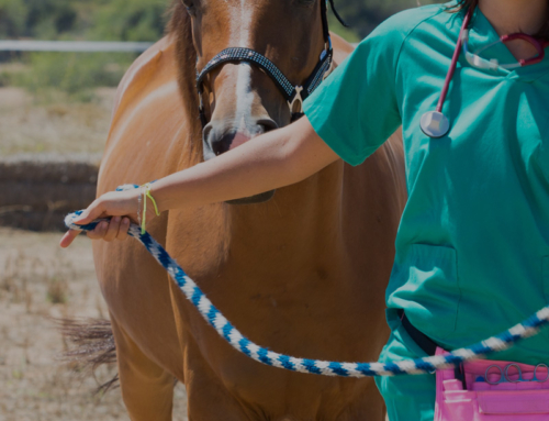Deworming Recommendations for Florida