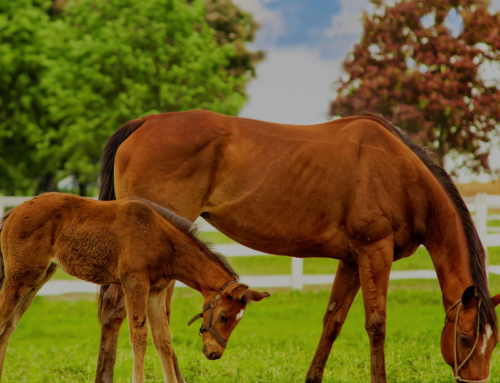 Equine Wellness: Anhidrosis