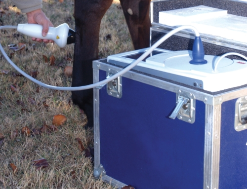 Equine Wellness: Shockwave Therapy